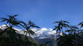 Well-Preserved, 2,500-Year-Old Marijuana Found at Chinese Tomb