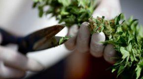 Arizona Democratic Party Backs Legalization
