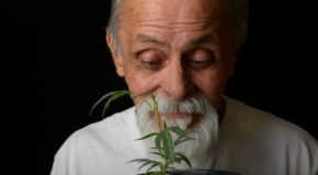 Legal Medical Marijuana Helps Older Americans Remain in the Workforce