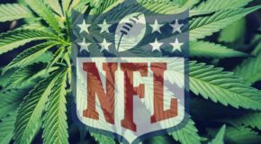 NFLPA 'Actively Studying' Medical Marijuana Use For Players