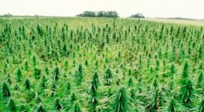 Hemp, Inc. Reports: New Mexico on Track to Legalize Industrial Hemp