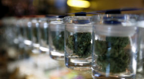 Medical Marijuana's Massive Windfall