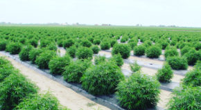 New Patent-Pending Water Soluble CBD Hemp Oil Formulation Significantly Increases Absorption