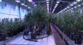 Massachusetts Medical Marijuana Dispensary to Launch Home Delivery