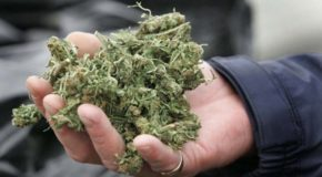 Study Suggests Marijuana Users More Successful, Active and Well-Adjusted