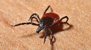 Cannabis Can Relieve Symptoms Of Lyme Disease