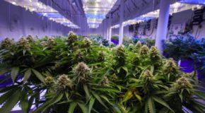 Texas Just Granted Its First Medical Marijuana Producer