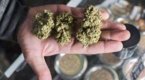 New Jersey Wants To Expand Medical Marijuana Program To Treat Opioid Addiction